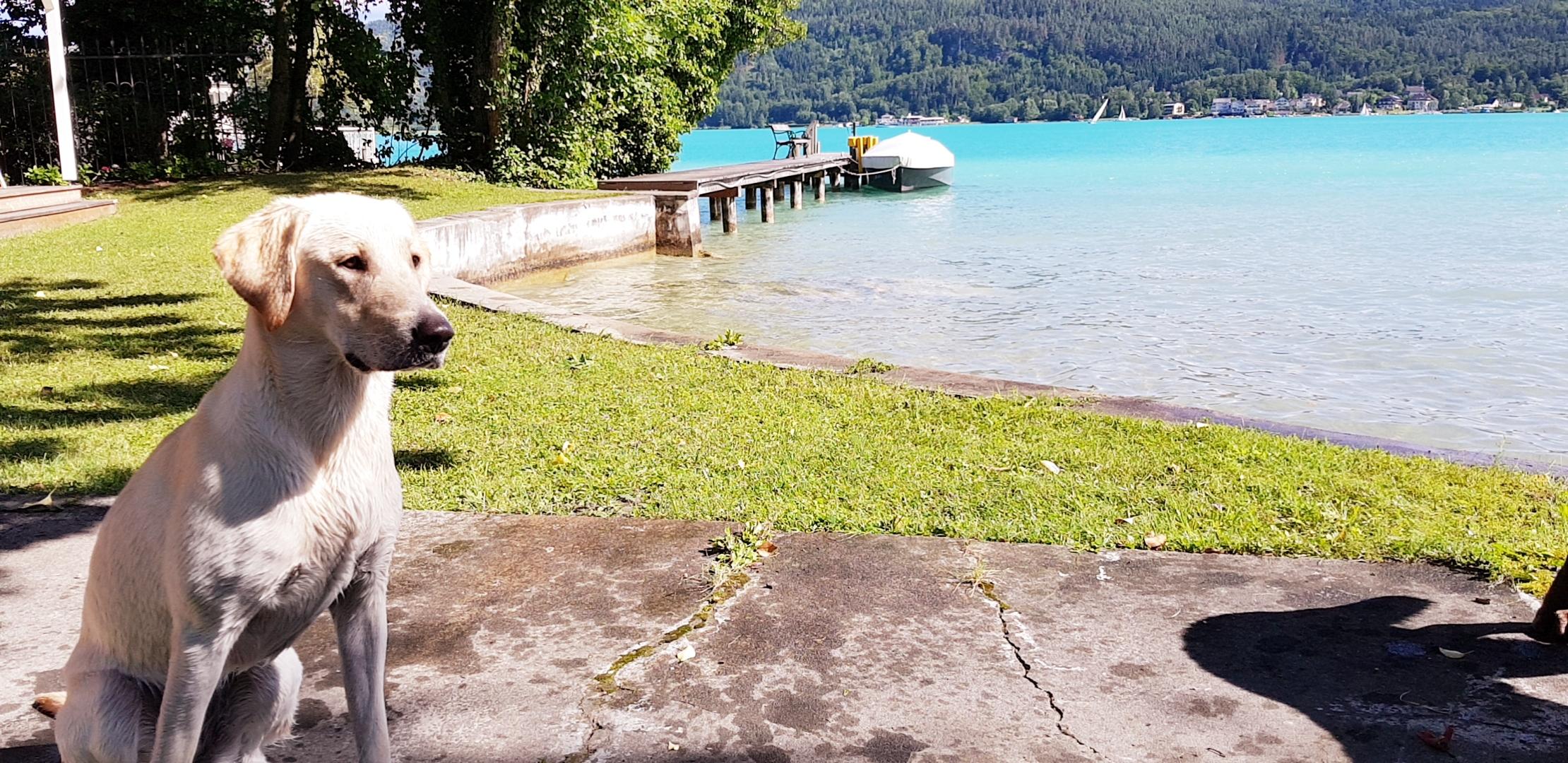 Azukas erster Sommer am Wörtersee